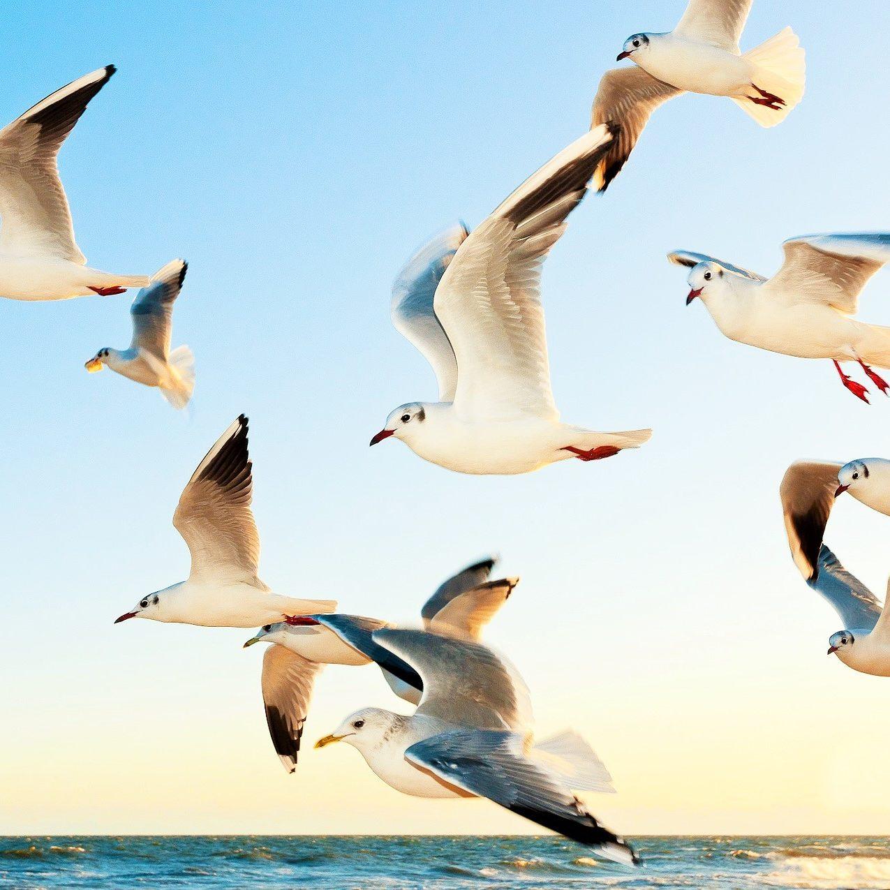 vögel fliegen (2)